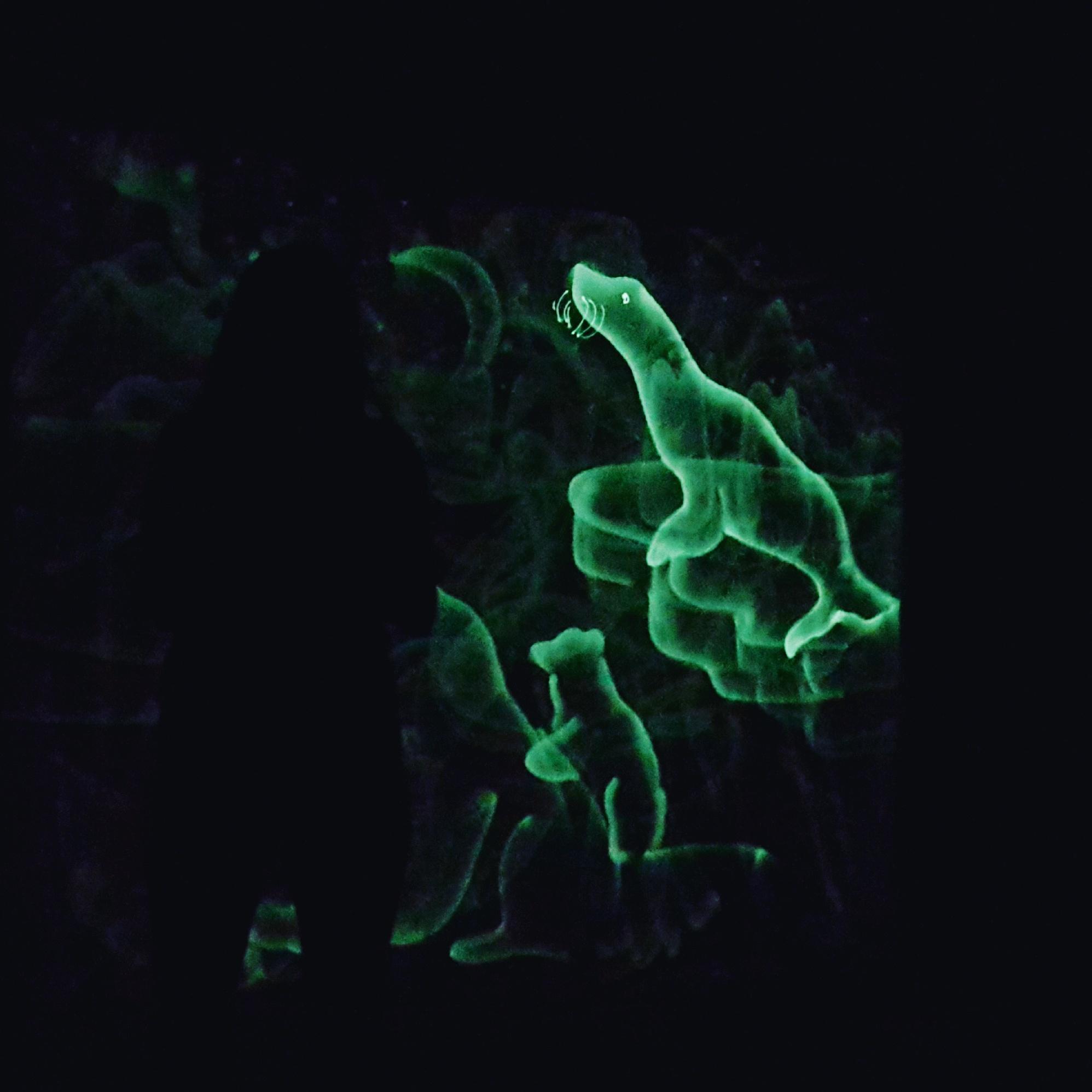 Шоу световых картин заказать в Туле, Калуге, Москве